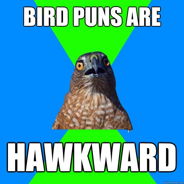 Bird puns are HAWKWARD - Bird puns are HAWKWARD  Hawkward