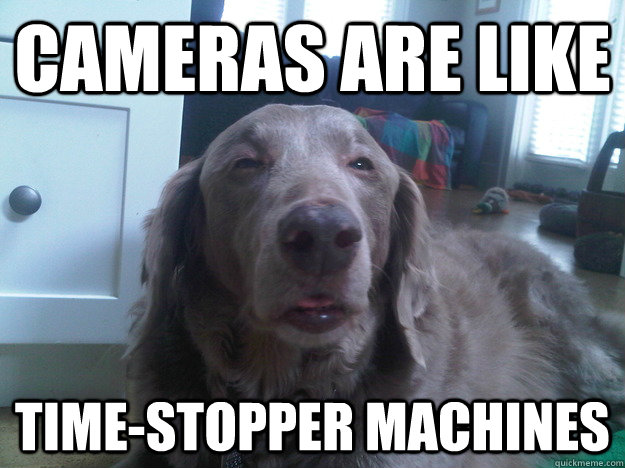 cameras are like Time-stopper machines - cameras are like Time-stopper machines  10 Dog