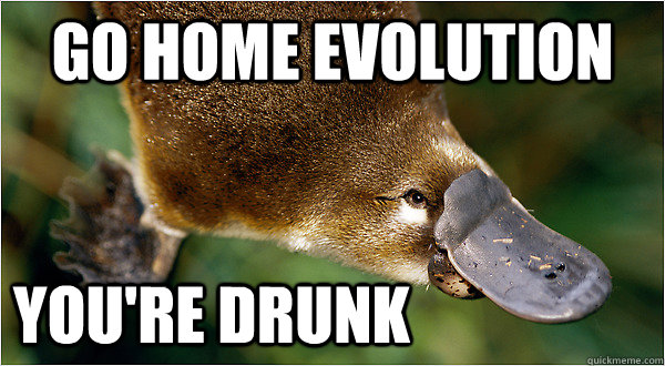 Go home Evolution you're Drunk  Platypus