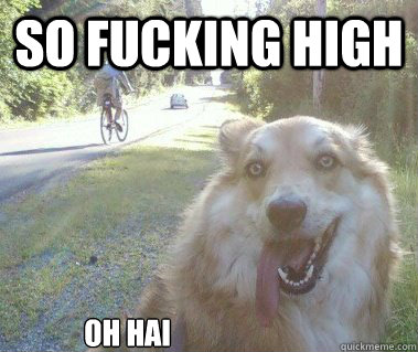 SO fucking high OH hai - SO fucking high OH hai  10 Dog