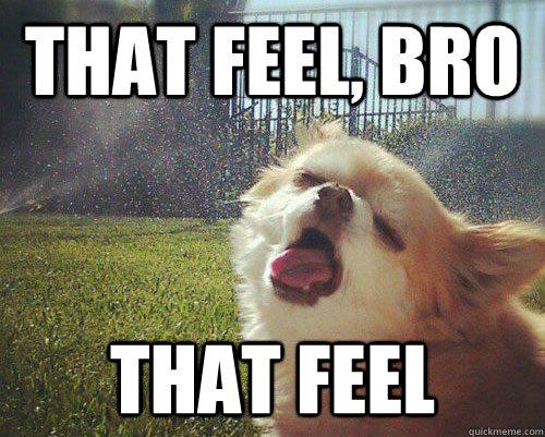 THAT FEEL, BRO THAT FEEL - THAT FEEL, BRO THAT FEEL  10 Dog