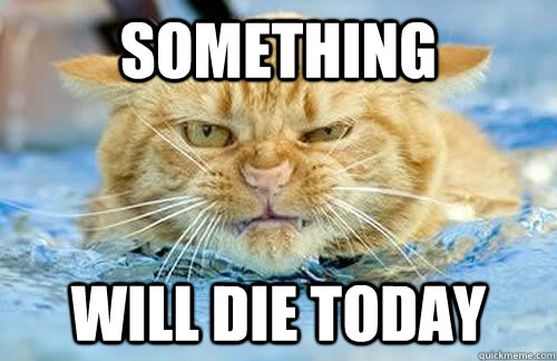 Something Will die today - Something Will die today  Angry cat is angry