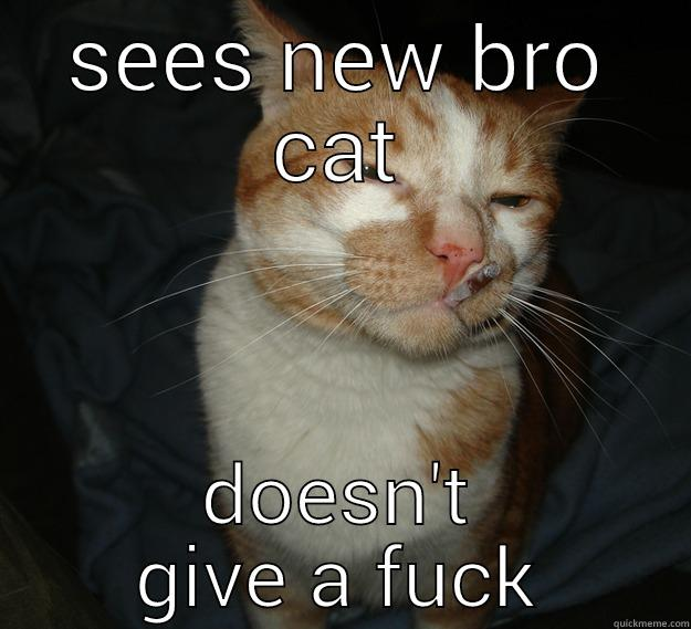 SEES NEW BRO CAT DOESN'T GIVE A FUCK Cool Cat Craig
