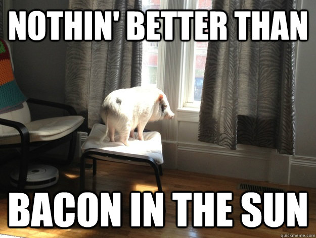 Nothin' better than Bacon In the sun