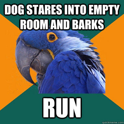Dog stares into empty room and barks RUN - Dog stares into empty room and barks RUN  Paranoid Parrot