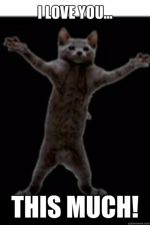 i Love You Cat Meme i Love You This Much Cat Meme
