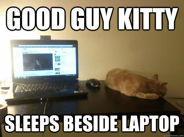 Good Guy Kitty Sleeps beside laptop - Good Guy Kitty Sleeps beside laptop  Misc