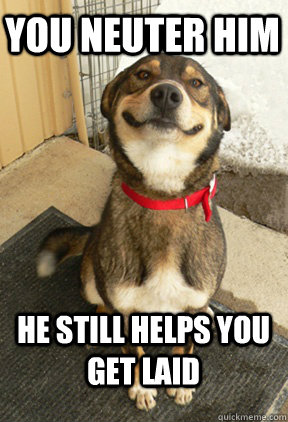you neuter him he still helps you get laid - you neuter him he still helps you get laid  Good Dog Greg