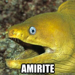 AMIRITE  Amirite Eel