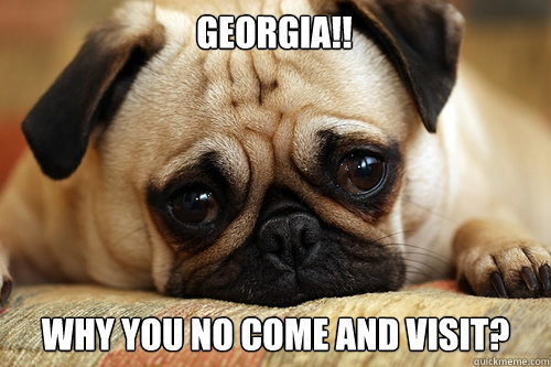 Georgia!! Why you no come and visit?  sad pug