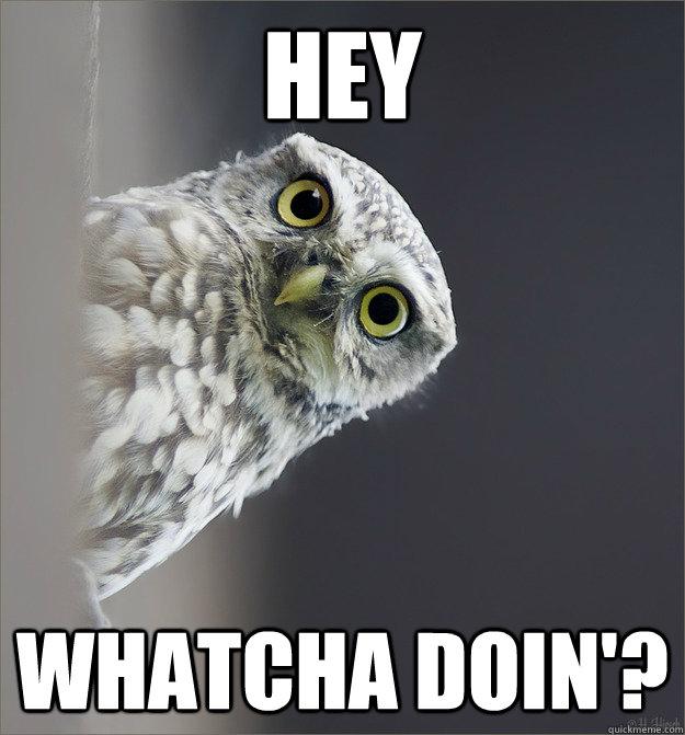 hey whatcha doin