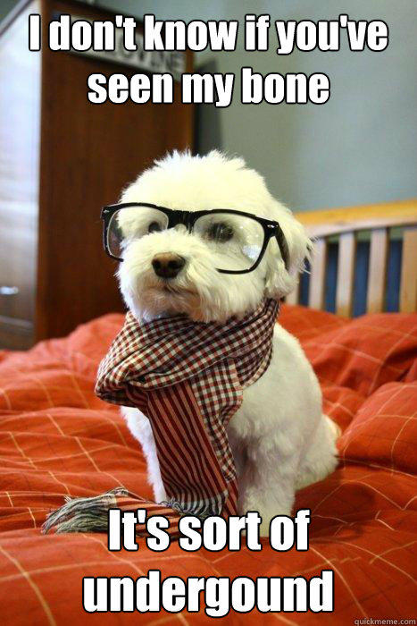 I don't know if you've seen my bone It's sort of undergound  Hipster Dog