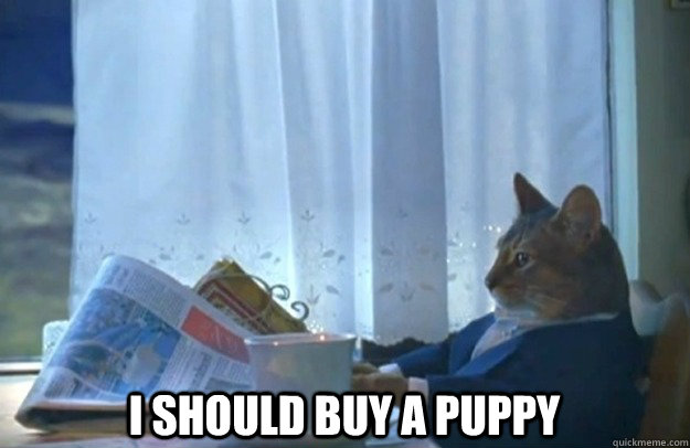 I should buy a puppy -  I should buy a puppy  Sophisticated Cat