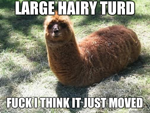 Large Hairy Turd FUCK I Think It Just Moved - Large Hairy Turd FUCK I Think It Just Moved  Alpacapillar