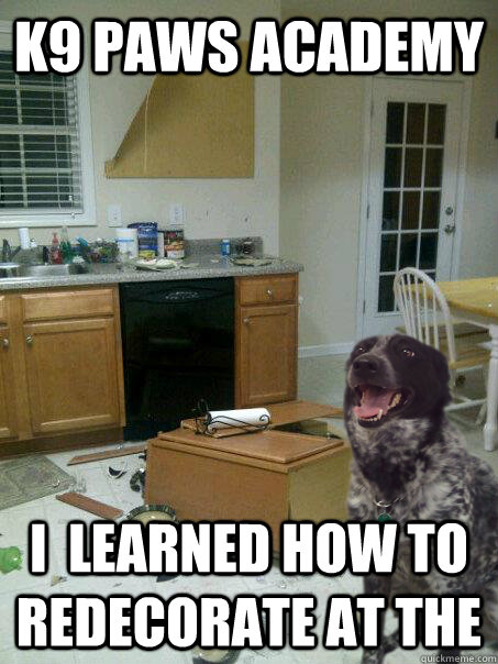 k9 paws academy i  learned how to redecorate at the