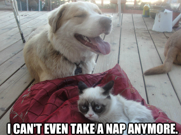 I can't even take a nap anymore.  - I can't even take a nap anymore.   another grumpy cat