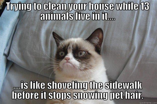 Funny Memes Clean Animals : Grumpy cat memes quickmeme