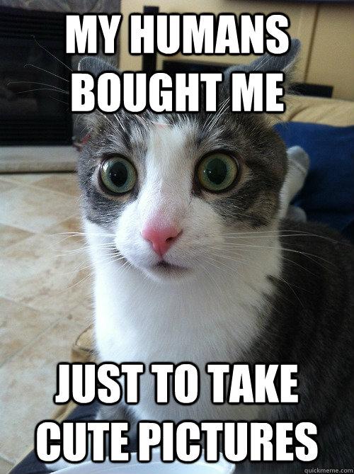 Sudden Clarity Cat memes | quickmeme