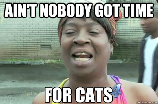 Ain't Nobody Got time for cats