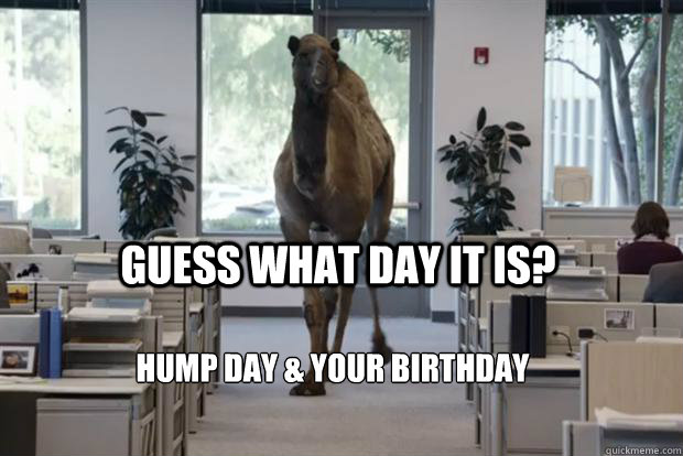 Guess what day it is? Hump day & your birthday - Guess what day it is? Hump day & your birthday  Hump Day Camel