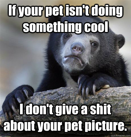 If your pet isn't doing something cool I don't give a shit about your pet picture. - If your pet isn't doing something cool I don't give a shit about your pet picture.  Confession Bear