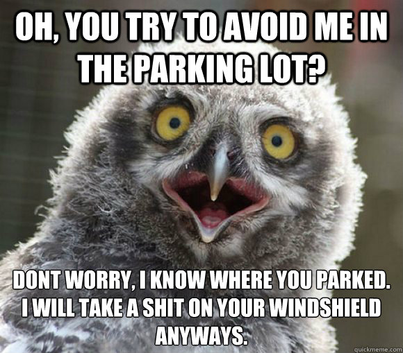 Oh, you try to avoid me in the parking lot? don´t worry, i know where you parked. i will take a shit on your windshield anyways. - Oh, you try to avoid me in the parking lot? don´t worry, i know where you parked. i will take a shit on your windshield anyways.  Overly Attached Bird
