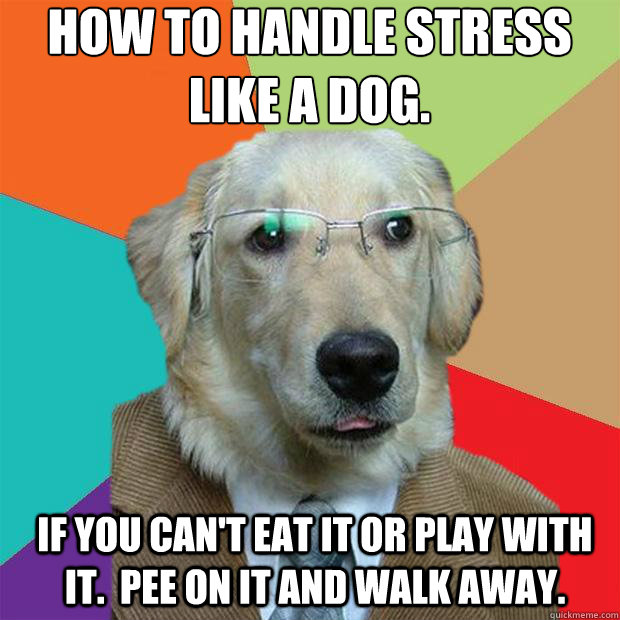 Don T Stress Funny Meme : How to handle stress like a dog if you can t eat it or