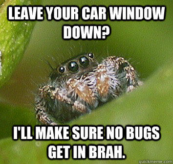 Leave your car window down? i'll make sure no bugs get in brah.  Misunderstood Spider