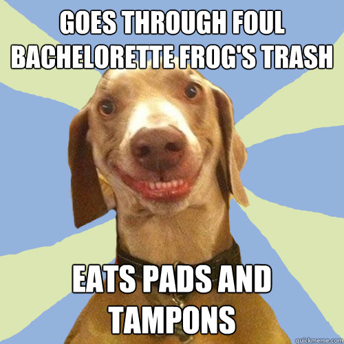 goes through foul bachelorette frog's trash eats pads and tampons - goes through foul bachelorette frog's trash eats pads and tampons  Disgusting Doggy