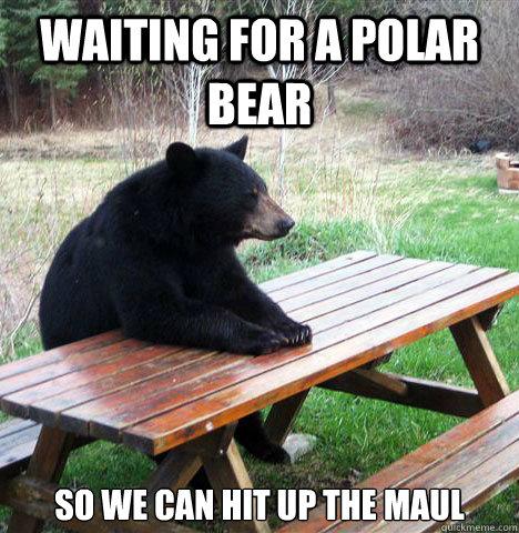 Waiting for a polar bear  so we can hit up the maul - Waiting for a polar bear  so we can hit up the maul  waiting bear