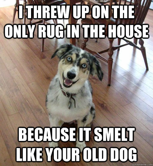 I threw up on the only rug in the house because it smelt like your old dog - I threw up on the only rug in the house because it smelt like your old dog  Overly Attached Dog
