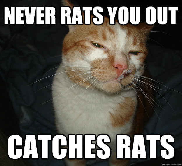Never rats you out Catches Rats - Never rats you out Catches Rats  Cool Cat Craig