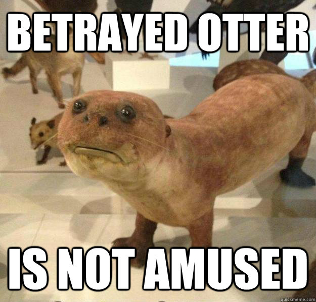 betrayed otter is not amused