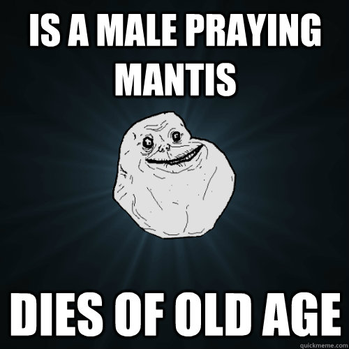 is a Male Praying Mantis Dies of Old age - is a Male Praying Mantis Dies of Old age  Forever Alone