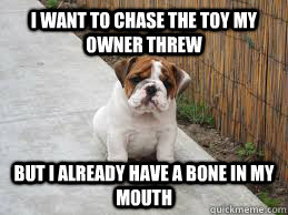 i want to chase the toy my owner threw but i already have a bone in my mouth