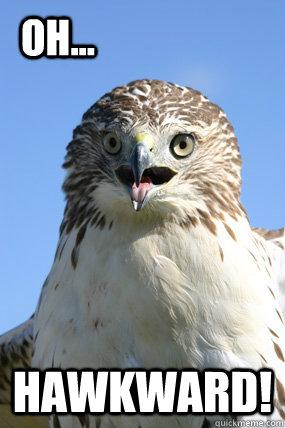 HAWKWARD! oH... - HAWKWARD! oH...  Hawkward