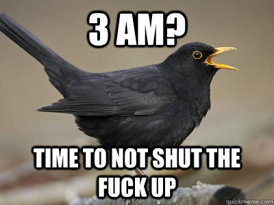 3 AM? Time to not shut the fuck up - 3 AM? Time to not shut the fuck up  Scumbag Blackbird