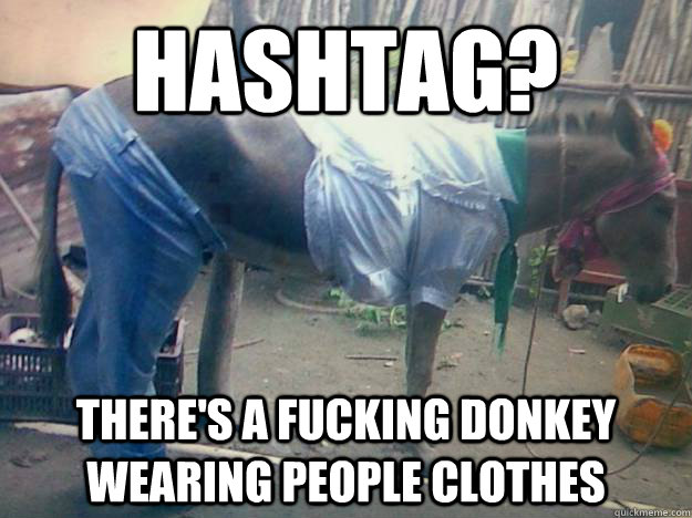 Hashtag? There's a fucking donkey wearing people clothes - Hashtag? There's a fucking donkey wearing people clothes