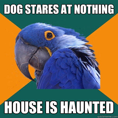 Dog stares at nothing House is haunted - Dog stares at nothing House is haunted  Paranoid Parrot