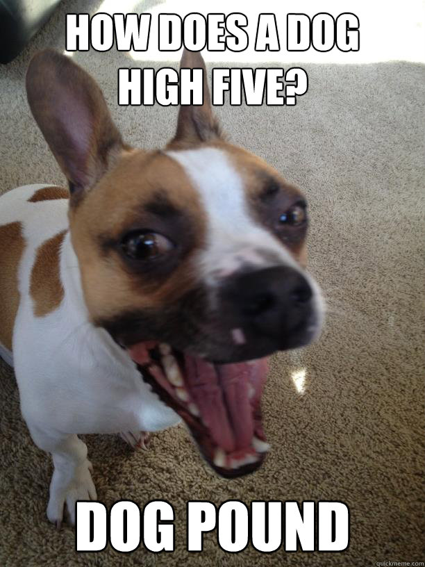how does a dog  high five? dog pound