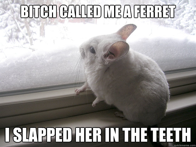 bitch called me a ferret i slapped her in the teeth  lonely chinchilla