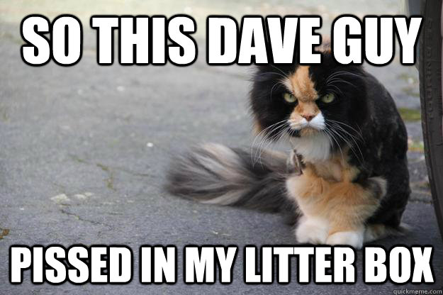 Angry Cat Memes - 2018 Funny Cats