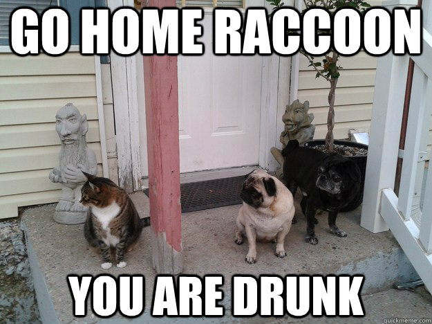 0e4ddbbabd926288725c753f7705dca7324d06e22f1142614697b019ec7c1537 go home raccoon you are drunk party foul raccoon quickmeme
