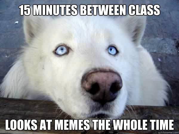 Husky Dog Meme