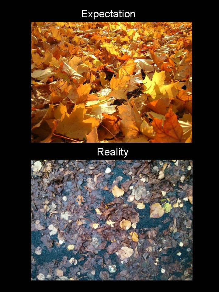Fall is disappointing. -   Misc