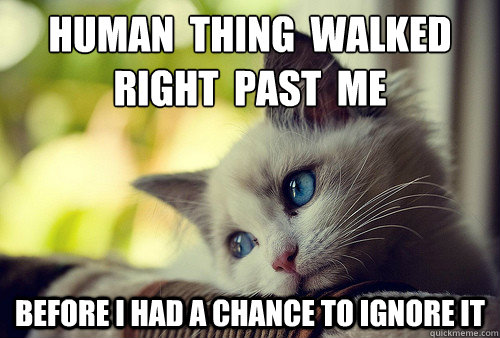 human  thing  walked  right  past  me before i had a chance to ignore it - human  thing  walked  right  past  me before i had a chance to ignore it  First World Problems Cat