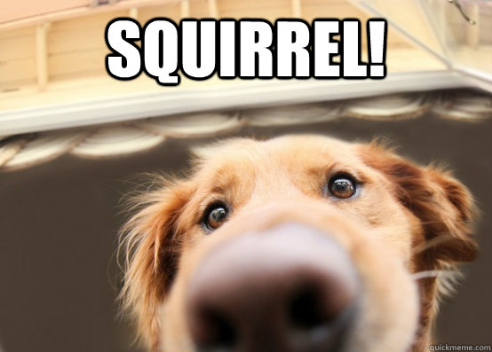 Squirrel!  - Squirrel!   Dug the Dog