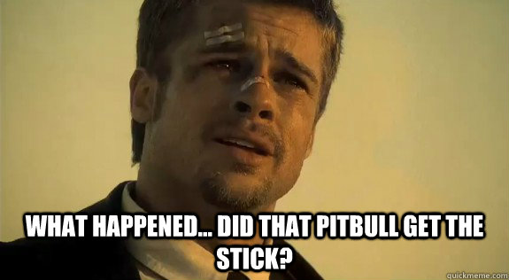 what happened... did that pitbull get the stick?