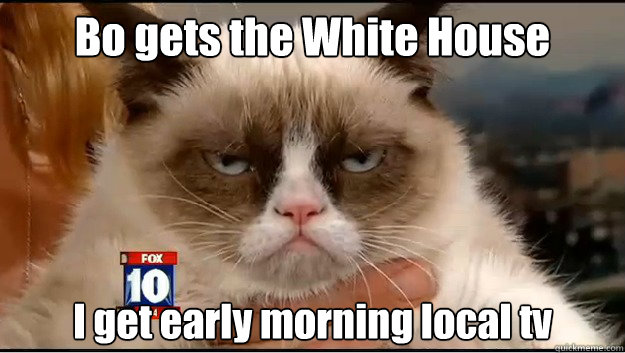 Bo gets the White House  & all the attention  I get early morning local tv