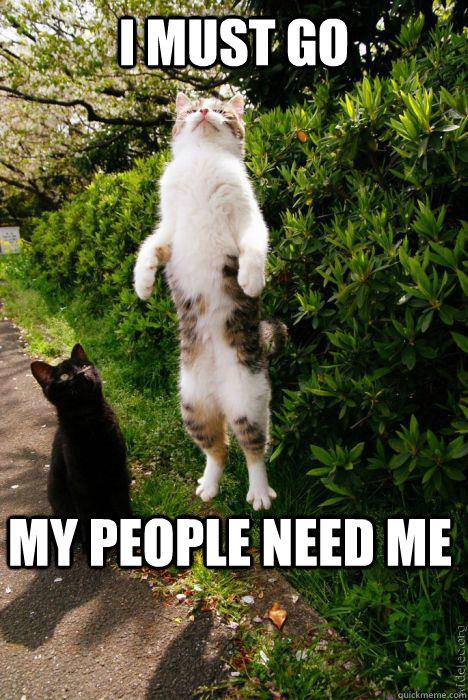 101f5568809bb887d1601020210d7c2eaa00e48e91b14789980b01c349d28049 rapture cat memes quickmeme,Rapture Meme